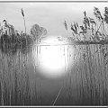 wiosenny spacer nad kanałem #szuwary #woda #twórcze #inaczej #spacer #Gdańsk #przeróbki