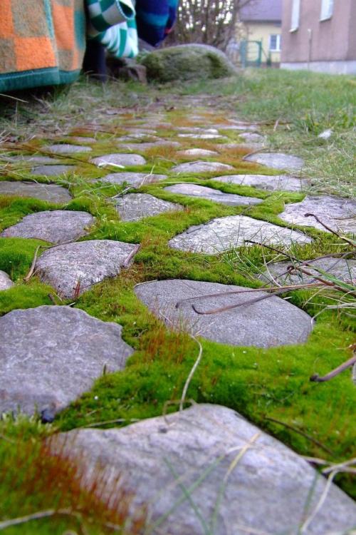 #kamienie #kamyczki #ogród #bruk #wybrukowane #przyroda #kapcie #zielone #mech #MińskMazowiecki #mińsk