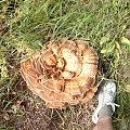 Huby_2 #DolnyŚląsk #jawor #myślibórz #krajobraz #przyroda #WąwózMyśliborski #rataj