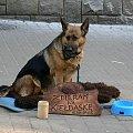 #pies #ciekawostki #ulica #Zakopane #pieniądze #zwierzęta #datki #zapomoga #kiełbasa #wilczur #OwczarekNiemiecki