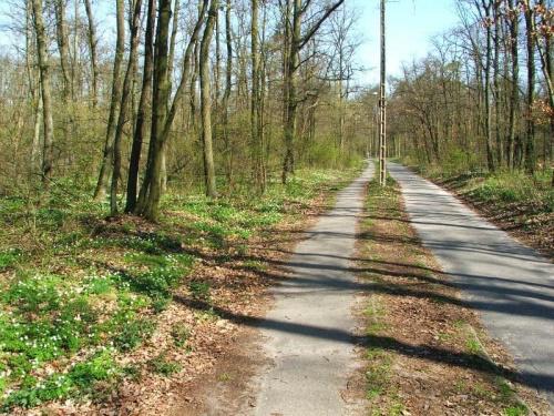Ścieżka rowerowa do Zakładów Azotowych #las #Puławy #Azoty