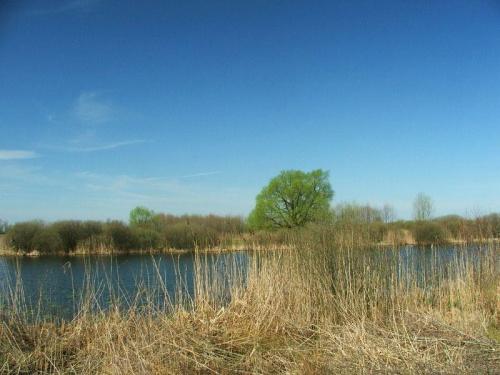 Nad Jeziorem Nury #Gołąb #Nury #las #jezioro