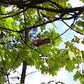 Skąd się tam to wzięło? #butelka #las #drzewo #drzewa