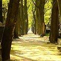tajemnica... #powązki #cmentarz #pogodnie #ciepłe #warszawa #aleja #StareDrzewa #drzewa #atmosfera