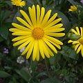 KWIATEK :) #KWIATY #żółty #piękne