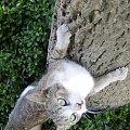 #kot #kotek #koteczek #pazury