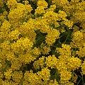 #kwiatki #żółty