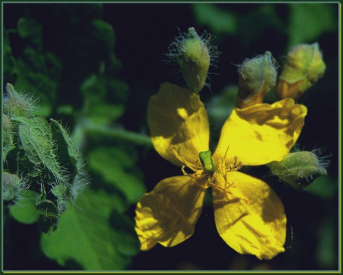wiosna, wiosna, wiosna... #flora #rośliny #natura #przyroda #kwiaty #PoryRoku #PolaŁąki #ogrody #wiosna