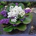 wiosna, wiosna, wiosna... #flora #kwiaty #natura #ogrody #PolaŁąki #PoryRoku #przyroda #rośliny #wiosna