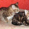 Kotki szukają domów
