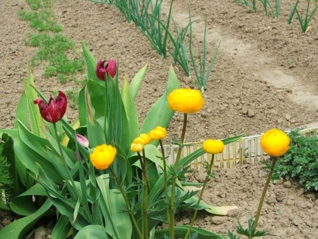 Kwiaty mojej mamy #ogródek #kwiaty #kwiatki #działka #kwiat #kwiatek