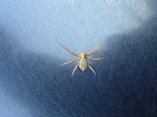 Pająk na masce #pająk