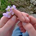 To są dłonie mojej dziewczyny :D Piękne, czyż nie? #dłonie