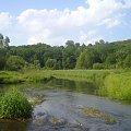 #rzeka #mokradła #zarośla