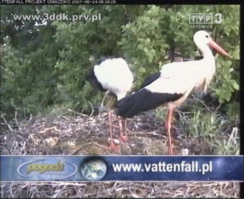 Bociany Vattenfall TVP3 Katowice