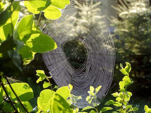 Wyszłam raniutko z kawką na taras, a ona tam była... cała w słońcu. #pajęczyna