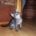 Główka w górę... #kot #koteczek #kruszynka #mały #fajny