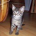 Jaki ja malutki jestem:-) #kot #koteczek #kruszynka #mały #fajny