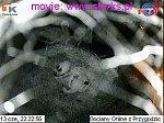 http://images21.fotosik.pl/368/ea56c2dd9f938fbbm.jpg