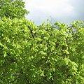 #drzewa #niebo #uczelnia #deszcz #krople #liście #gałęzie #chmury #szyba #okno