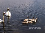 http://images21.fotosik.pl/372/1358ed802714bc3bm.jpg