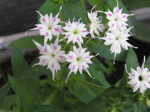 Nieznany mi kwiat