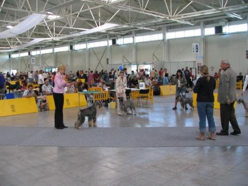psy- klasa championów - Warm Winner ze Zahrabske, Ervin ze Vsackich Luhu , Enter Gagatek