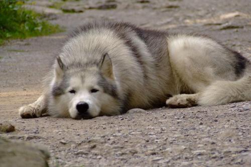 #góry #pies #PiesNaSzlaku #ciekawe #ładne #DzikiŚpiący