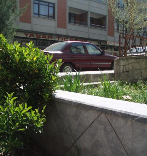 Krzew z Turcji
