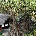 Centrum Kultury Polinezyjskiej - roślinność #kultura #egzotyka #taniec #rośliny