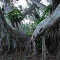 Centrum Kultury Polinezyjskiej - zwierzęce drzewa #kultura #egzotyka #taniec #rośliny
