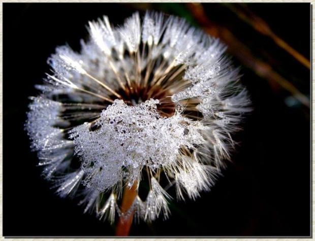 brrrr.... #kwiaty #natura #rośliny #ogrody #ogród #łąki #przyroda #flora #owoce