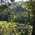 między drzewami, #pawie #Hawaje #Maui #Hana #natura