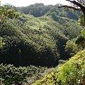 a w dole gęsto i zielono, #pawie #Hawaje #Maui #Hana #natura