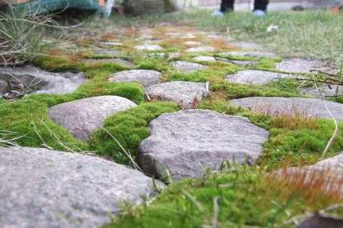 kamyczki #kamienie #kamyczki #ogród #bruk #wybrukowane #przyroda #kapcie #zielone #mech